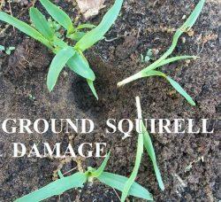 DIY Electronic Garden Pest Control