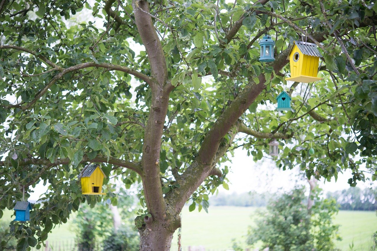 Can You Varnish a Birdhouse?