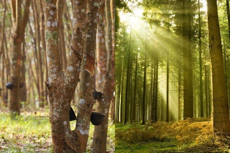 pine vs parawood